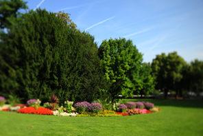 Blumenbeet im Volkspark © Carsten Costard
